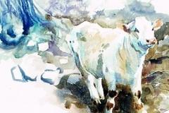 The White Calf