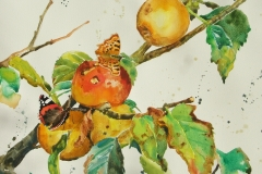 Red Admiral, Comma and Russets